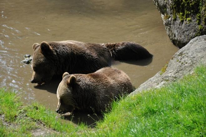 Výběh medvědů je jistě nejatraktivnější.
