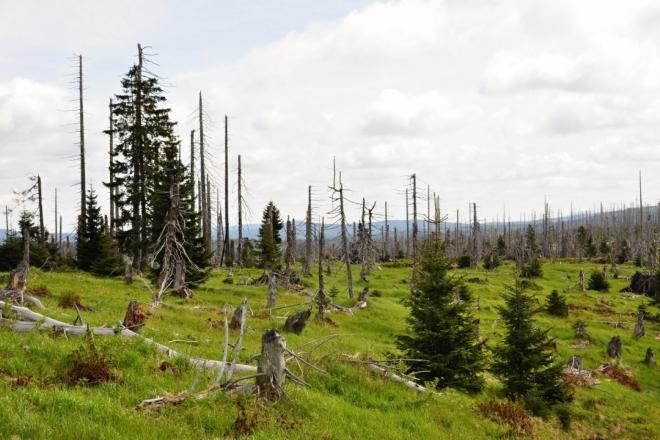 Krajina si stále pamatuje kůrovcovou kalamitu. Pamatuji si ji dobře zcela zalesněnou, s výhledy pouze z vrcholu hory.