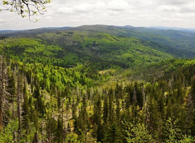 Nedaleko horské chaty je vyhlídka na Roklanské jezero a hřeben Blatného vrchu s Luzným v pozadí.