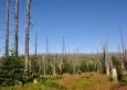 Po kůrovcové kalamitě se zdejší lesy jen pozvolna obnovují.