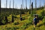 Zetlelé kmeny a vysoká tráva vyžadují náležitou pozornost. Venca si připisuje další šrámy a pády.