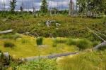 I Biskupská slať bez okolních vysokých lesů vysychá. Snad za pár let ji pomohou mladé smrčky, které zde jsou nově vysazené.