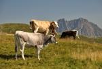 Milky najdete i v Rakousku.