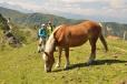 Koně, krávy, jen ovce v Alpách chybí. Jejich stáda jsou ojedinělá a vzácná.