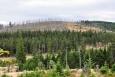 Tam kde se vysadil les je již zeleno. Jinde stále převládá šeď.