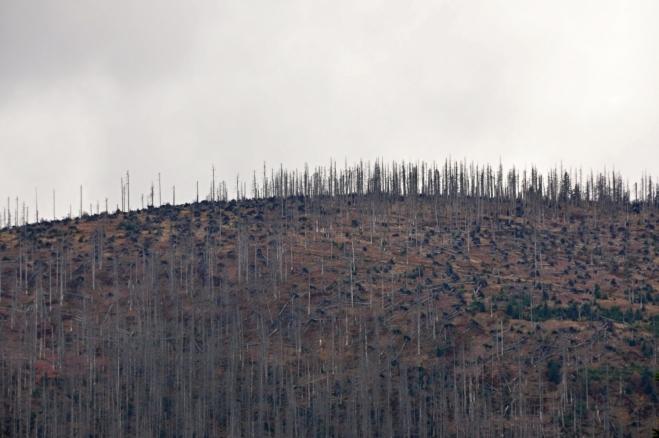 Plesná (1 336 m n. m.).