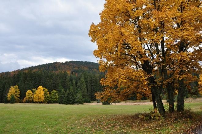 Pohled k Dřevěné holi od Hůrky.