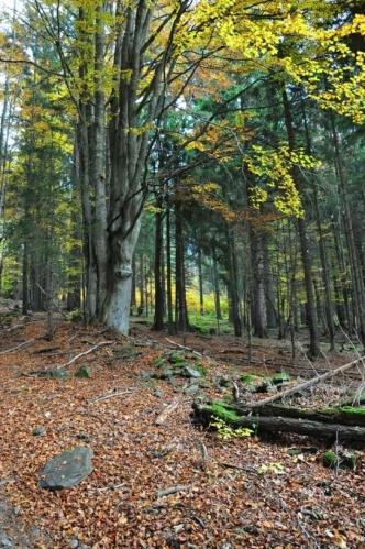 Pod Žlíbským vrchem člověk cítí silnou karmu místa, kudy staletí procházeli soumaři. S dnešním klidem se to nedá srovnat.