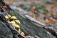 Pozůstatky houbové sezóny, co ani nezačala.