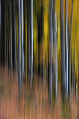 Magie bučin zklidňuje mysl. Před námi je posledních pár kilometrů třídenního putování barevně laděnou přírodou.