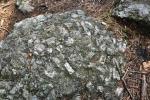 Detail kamene vykazuje hlubinné vyvřeliny vrásozlomných struktur centrálního moldanubického plutonu.