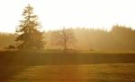 Nízké podzimní slunce zapadá již před pátou odpolední. Mnoho času nezbývá. Jsme na dohled Pohoří na Šumavě.