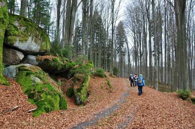 PP Pivonické skály začíná již u hranic. Nad námi je atraktivní Stříbrný vrch (936 m n. m.) s bučinovým porostem.