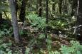 Poprvé nakukujeme do skandinávského lesa v okolí skokanského můstku v Lillehammeru. Na nějaké procházky mezi stromy to nebude, vše je podmáčené a špatně prostupné.