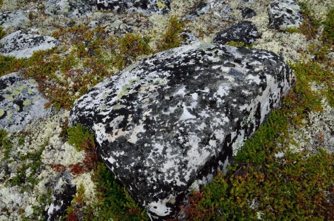 Detailní pohled na strakatý kámen