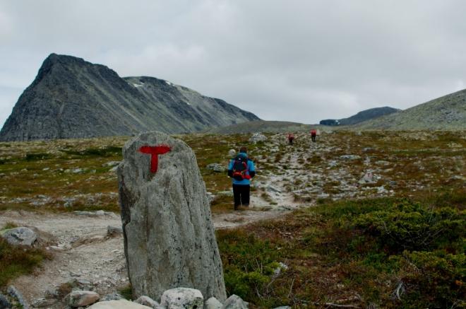 Poslušně následujeme červená téčka, kterými jsou v Norsku značeny téměř všechny turistické trasy. V pozadí vrchol Svartnuten (1840 m).