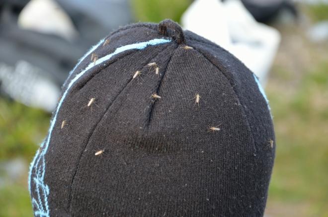 Od určité hodiny nás neustále otravuje mračno komárů, obzvláště rádi sedají na naše čepice.