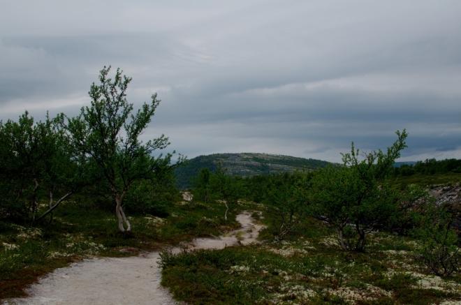Dál budeme pokračovat po písčité cestičce čarovným lesíkem plným pokroucených bříz, záhy opustíme národní park.