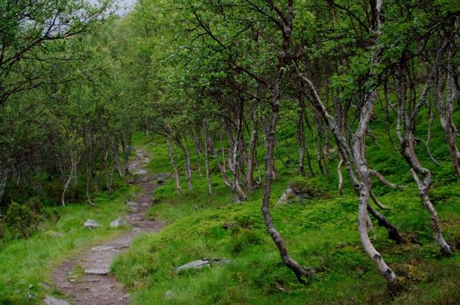Procházíme dalším půvabným březovým lesíkem.