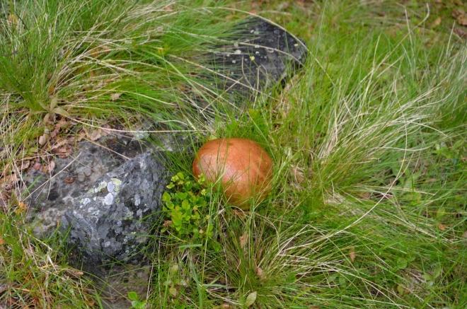 U cesty potkáváme i rostoucí houbu.