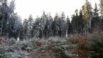 Zamrzlý les.