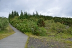 Nahoru stoupáme lesem, chvíli i příjemnou pěšinkou bez asfaltu. Stromy však nejsou moc vysoké.