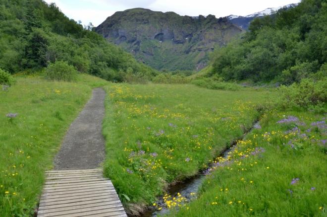 Krásně zelené údolí, kde si skoro nepřipadáme jako na Islandu. Ani tu téměř nefouká.