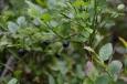 Lesní plody v norském lese
