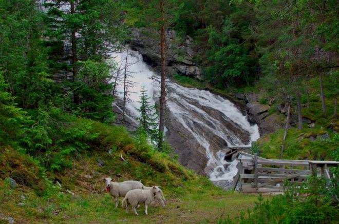 U vodopádu nechtěně plašíme několik ovcí, to se nám asi za dovolenou stane ještě mockrát.