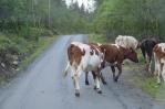 Zpevněná cesta k turistické základně Spiterstulen, Norsko