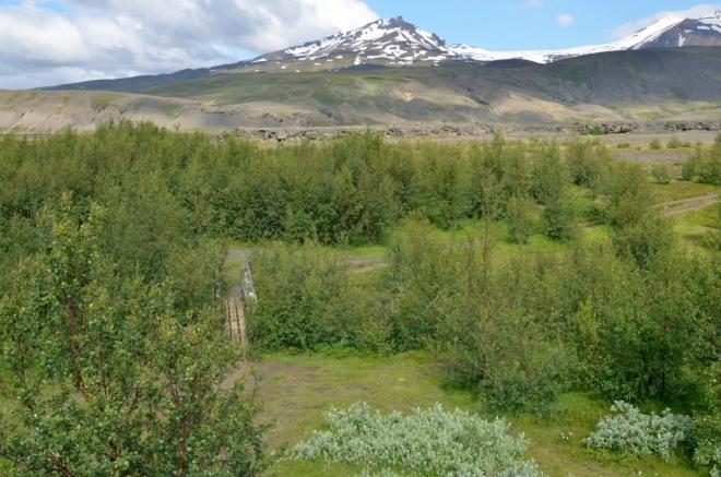 Další říčku překračujeme po lávce v lese islandských rozměrů.