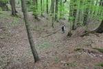 Prastará zemská stezka u Výhně je hluboce zařïznutá v měkkēm lesnīm terénu.