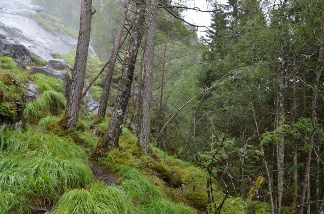 Norský deštný les plný trávy, mechů a borůvek. Kdo si sem nahoru vyrazil z auta jen v sandálech, bude rád, když se po cestě dolů nevyválí v bahně, což tady hrozí na každém kroku.