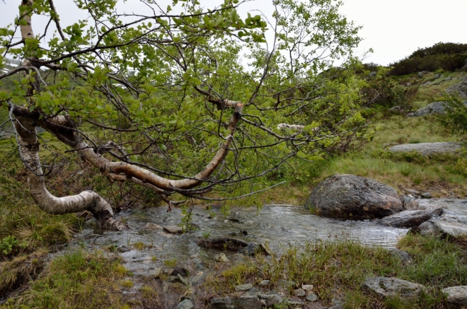 Jeden z posledních stromů