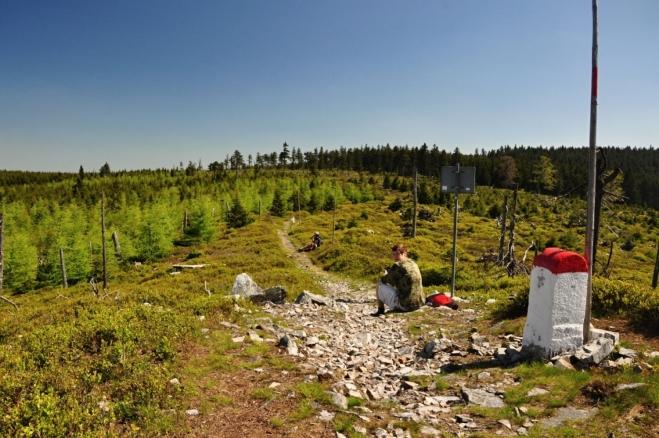 Čerstvě zelené modříny na polské straně hranice.