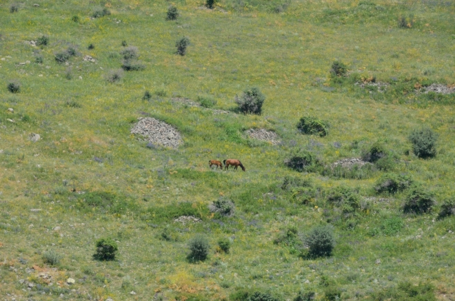 Koně pasoucí se na vzdálené stráni. Nyní obdivovaná scenerie, později naprostá rutina. Tento výlet do hor by se měl vymykat všemu, co jsme dosud na cestách zažili.