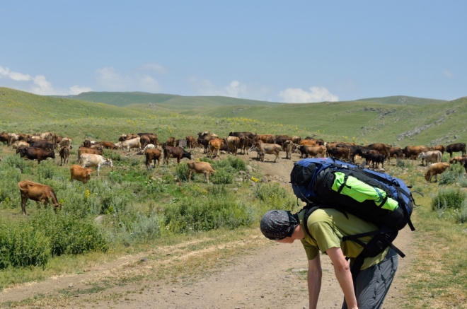 První pořádné setkání s horskými zvířaty – budeme muset překonat toto neprostupné stádo krav.