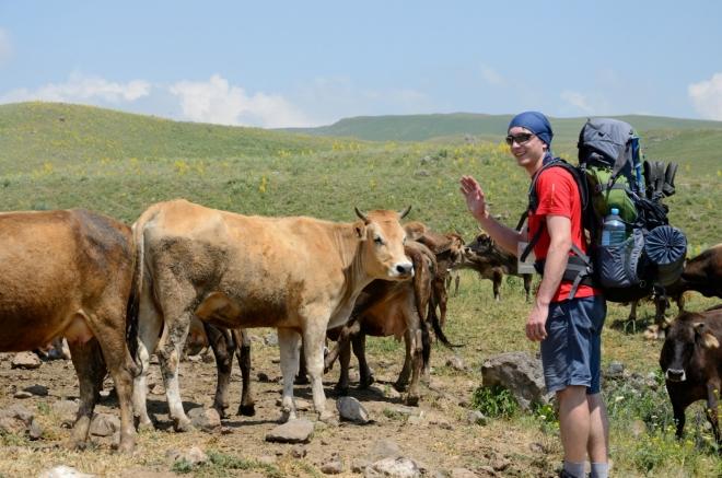 Nakonec bez problémů, jsou to jenom krávy. Vše sleduje místní pastevec z chýše na nedalekém kopečku.