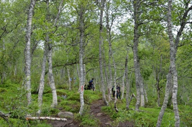 Lidé rozptýlení v lesíku. Nejúmornější část stoupání máme naštěstí již za sebou, následují přijatelnější úseky, nikoli však méně blátivé.