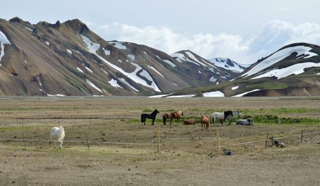 Koně pasoucí se u kempu a duhové hory za nimi
