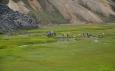 Horké potoky obsypané lidmi se nacházejí hned u okraje lávového pole u kempu v Landmannalaugaru