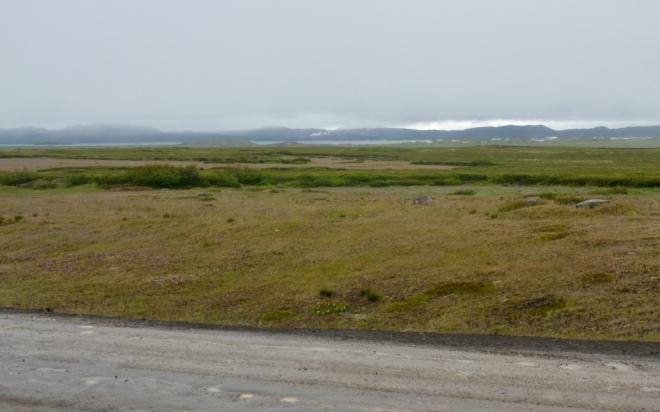 Pastviny a v dáli jezero Mývatn, jehož okolí budeme obdivovat další den. Za jezerem je vidět kouř značící geotermální aktivitu.