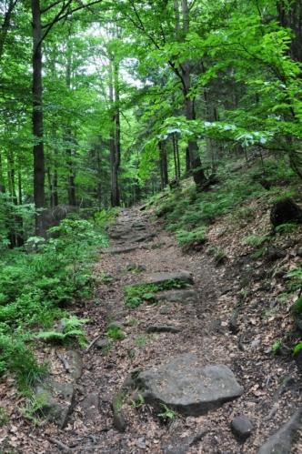 Stoupání na Burkův vrch (1 032 m n. m.). Ten se traverzuje po červené, ale lovci tisícovek R + V ho zdolají.
