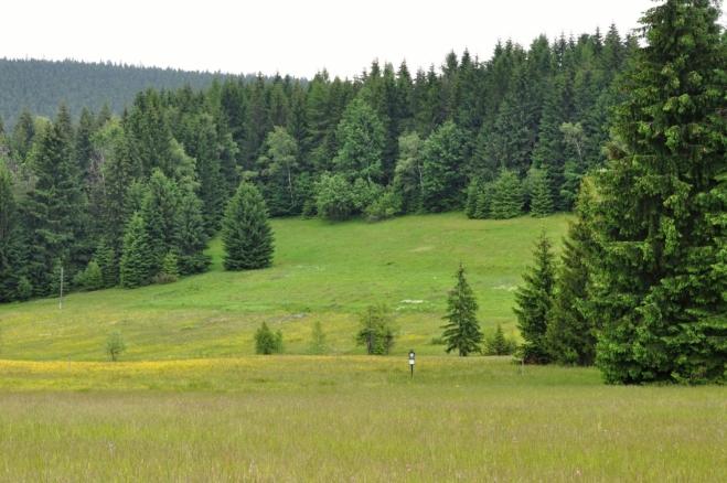 PP Obidová chrání nejcennější beskydské rašelinné louky (sihly) v mělké podhřebenové sníženině v pramenné oblasti Sihelského potoka (pravostranná zdrojnice Mohelnice). Nachází se v nadmořské výšce 710-750 m. Jedním z nejcennějších druhů vázaných na zamokřená místa s porosty rašeliníků je rosnatka okrouhlolistá (Drosera rotundifolia). Zdejší populace je nejpočetnější na území CHKO Beskydy, patří však také k nejohroženějším (na několika beskydských lokalitách již vymizela). Další silně ohrožený druh květeny ČR všivec bahenní (Pedicularis palustris) tvořil ještě na počátku 90. let 20. stol. populaci čítající několik stovek rostlin, v posledních letech lze nalézt sotva několik desítek. Dosud hojný je všivec lesní (Pedicularis sylvatica), ze vstavačovitých (Orchidaceae) prstnatec májový (Dactylorhiza majalis) a prstnatec Fuchsův pravý (Dactylorhiza fuchsii subsp. fuchsii).(viz http://nature.hyperlink.cz/Beskydy/Obidova.htm)