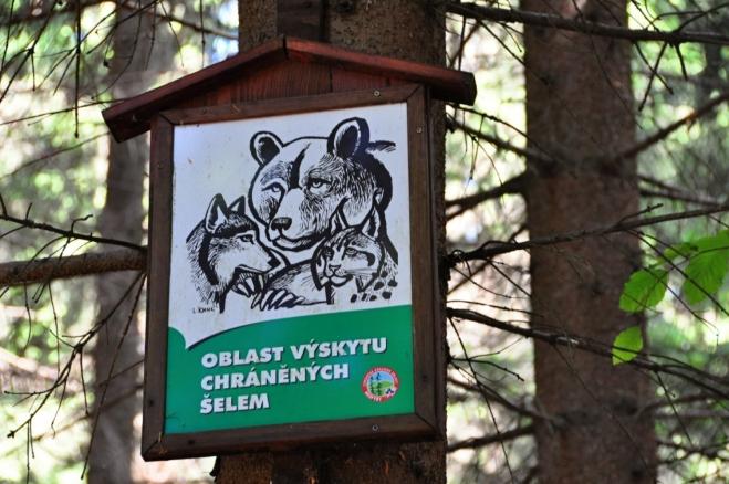 Vstupujeme do lesa plného nebezpečné divé zvěře.