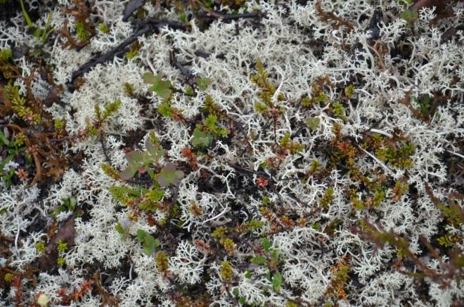 Bílý mech (nebo jiná rostlina)