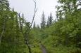 Jeden z mála větších islandských lesů