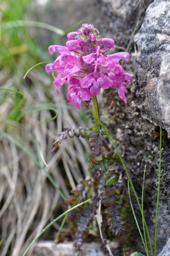 Dolomity jsou přitažlivé nejen úžasnou krajinou, ale také skvělou botanickou zahradou. Začátek července je ideální pro poznávání mnoha druhů bylinek.