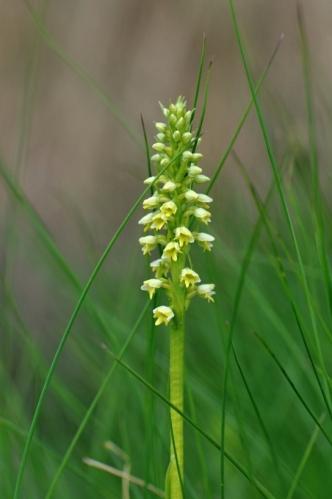 Toto už orchidej je.