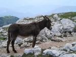 Pět fotek Venci z pochodu na vrchol Schlernu, kam jsem se nedostal.